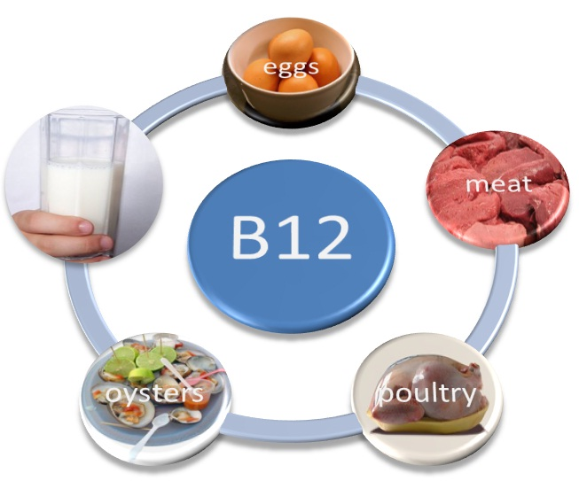 Vitamin B12 Rich Food Sources